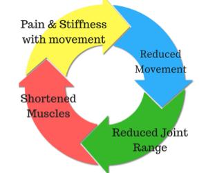 Understanding Joint Stiffness